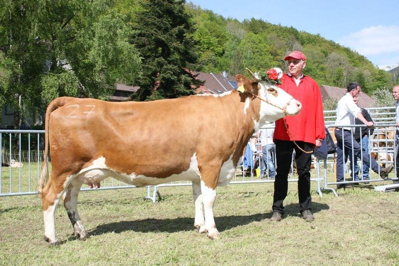 Reservesiegerin in der starken Konkurrenz um das beste Euter wurde die Naxnap-Tochter Bella vom Betrieb Helmut Dietsche, Münstertal. Vorgeführt wurde die Augenweide von Thomas Riesterer aus Buggingen, dem Schwager von Veronika Dietsche.