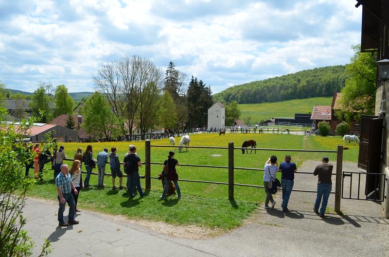 Viele Besucher verharrten am Weidezaun, um Stuten und Fohlen zu beobachten.