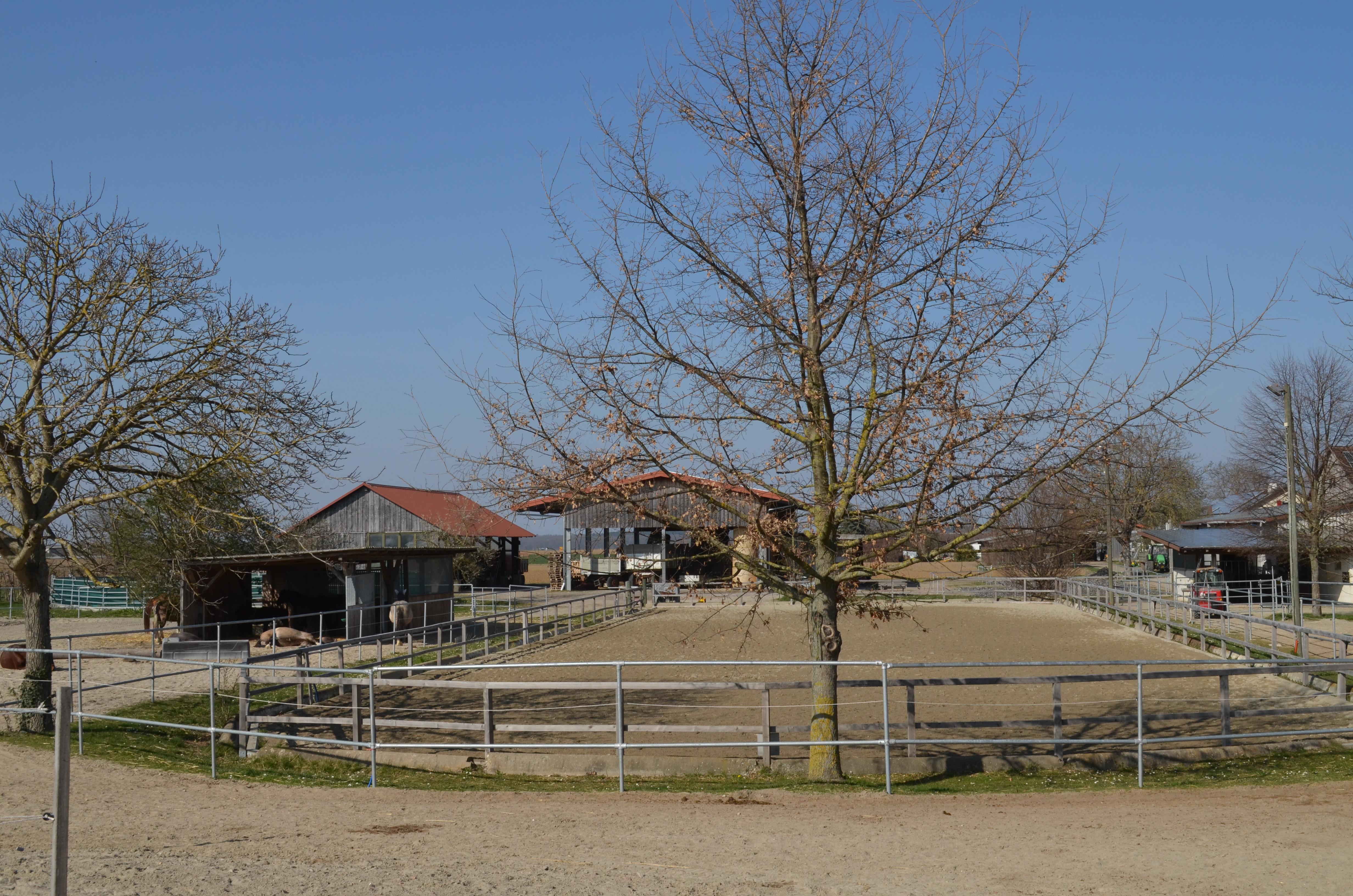 Reitplatz und Unterstand (links)